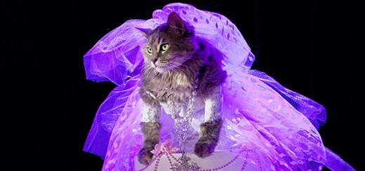 Une chatte recrée la performance légendaire de Madonna 'Like A Virgin' des VMA 1984