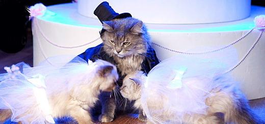 Trois chats revisitent la performance de Madonna/Britney/Christina aux VMA 2003
